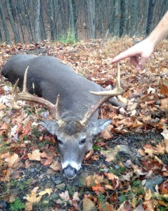 Officers Seized an illegally harvested nine-point buck