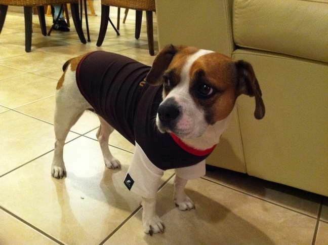 Monicea: French Bulldog Puppy Craigslist