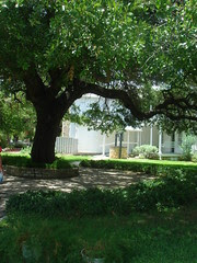 View of Tree, Well, and New Annex