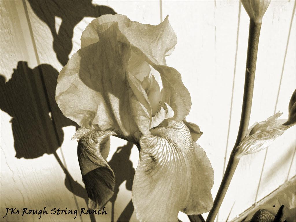 Iris' Shadow