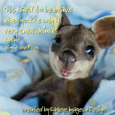 Funny Animal Picture With Inspirational Quotes. QuotesGram