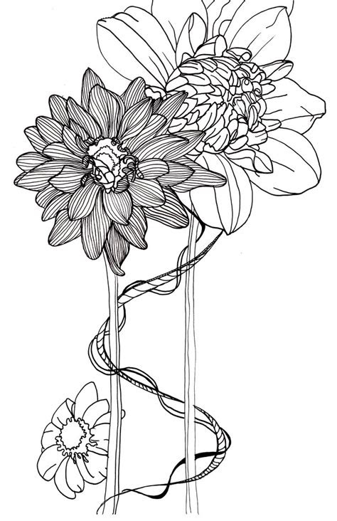 drawing flowers dahlias drawings pinterest