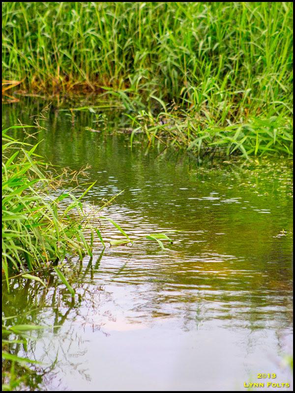 Little Wekiva River