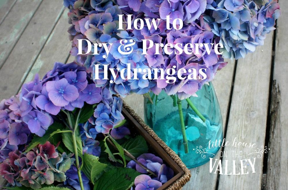 photo how-to-dry-and-preserve-hydrangeas_zpsyslmyzru.jpg