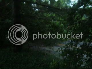 tree across road