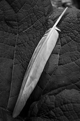 Leathery & Feathery