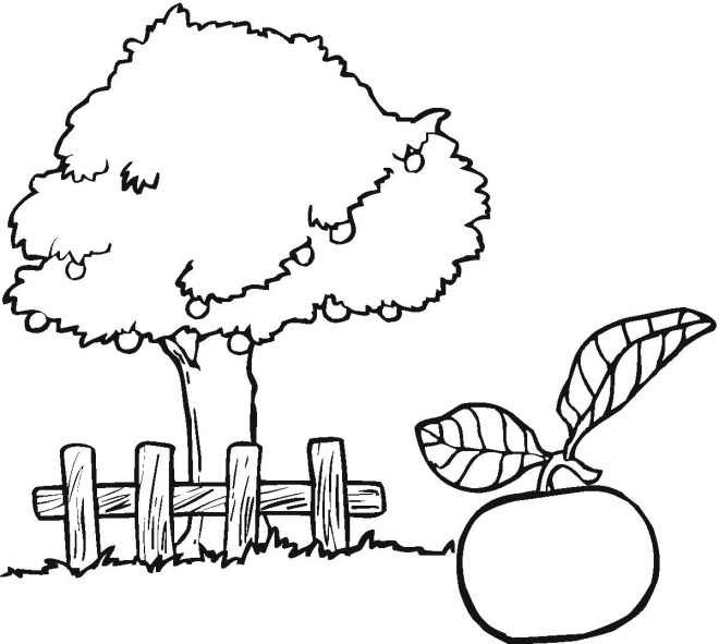 660 Apple Tree Coloring Pages For Preschoolers  Images