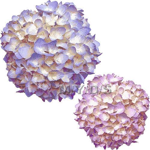 紫陽花の花アジサイの花のイラスト条件付フリー素材集