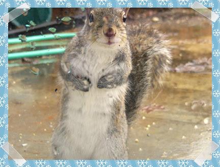Peeping Tom squirrel
