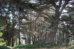 tree shapes Southern Walkway