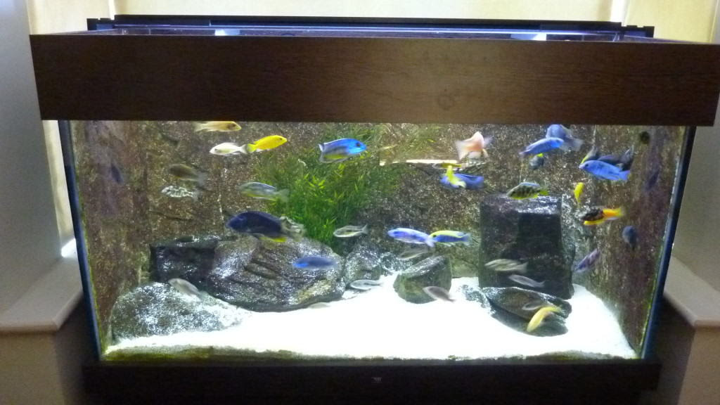 Should I Put A Background On My Fish Tank Aquarium Tropical Fish Site