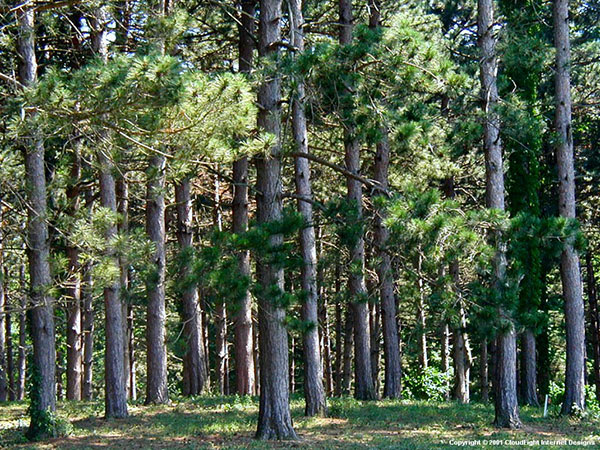 Building Deep Woods Food Plots In Pines And Hardwoods By