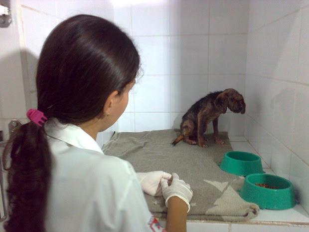 Filhote está sob cuidados de veterinários (Foto: Rodrigo Mansil / TV Tem)