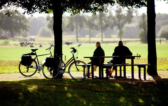 seniors-netherlands
