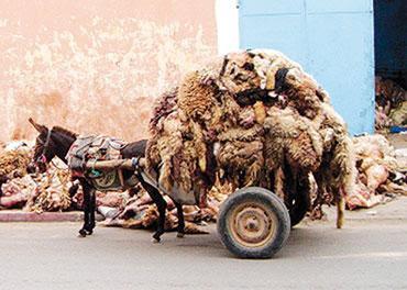 """Résultat de recherche d'images pour """"collecte peau  de mouton"""""""