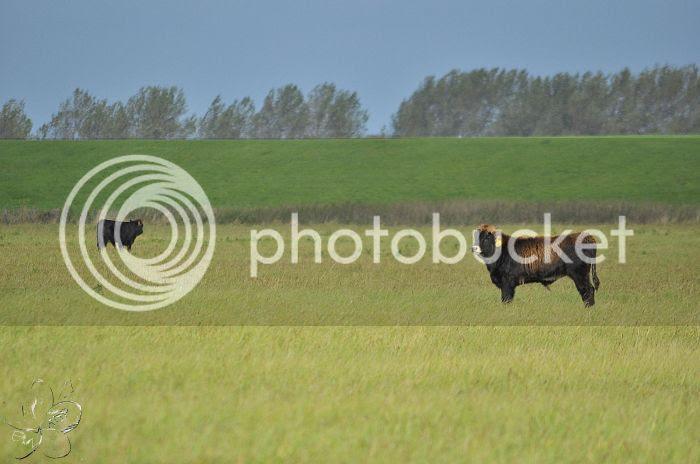 photo 15-10-2013StaatsbosbeheerZuid-Holland210-border.jpg