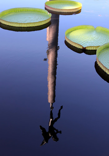 lilypad_reflection