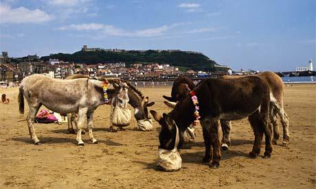 Donkeys on Scarborough beach, North Yorkshire, England