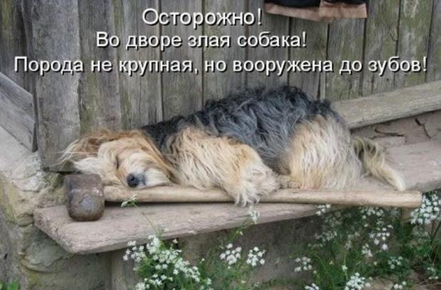 Let's smile together!  :) (37ulybok)