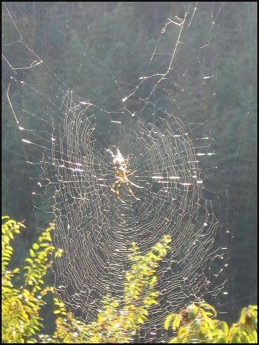 01 Spider sunshine