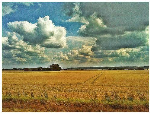 skåne field