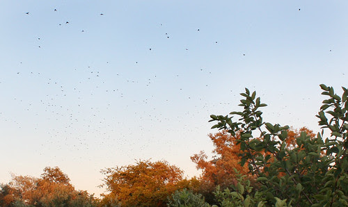 birdsandcolours