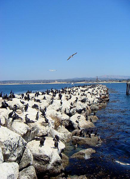 File:Monterey rock break.JPG