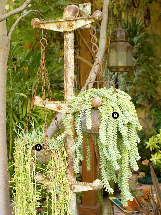 Hanging baskets of succulents