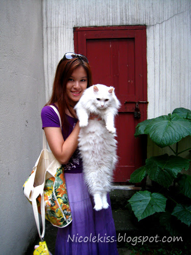 white persian cat in tai kang road