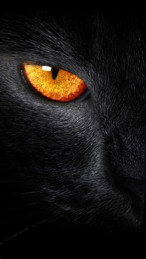 Black Panther iPhone Wallpaper   WallpaperSafari