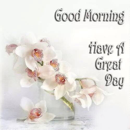Good Morning Have A Great Day Pictures Photos And Images For