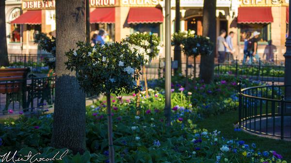 Disneyland Resort, Disneyland, Main Street U.S.A., Town Square, Flower