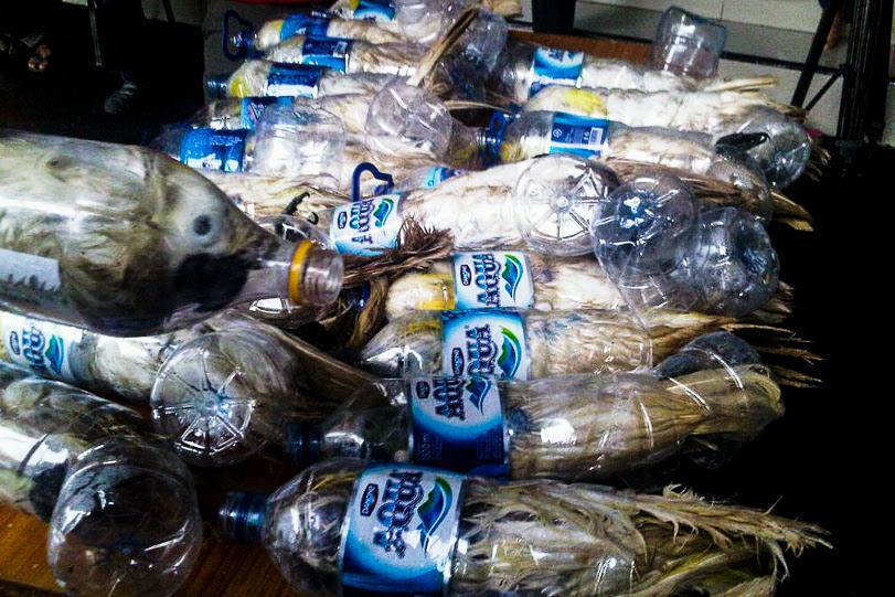 Vinte e três cacatuas e um papagaio foram encontrados amontoados em garrafas plásticas de água a bordo de um navio na Indonésia. Foto: Petrus Riski/Mongabay