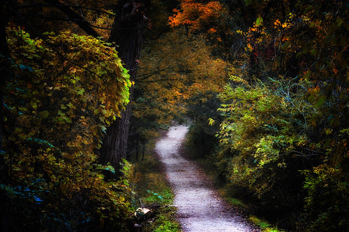 the path into the enchanted forest