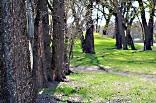 parkday, trees
