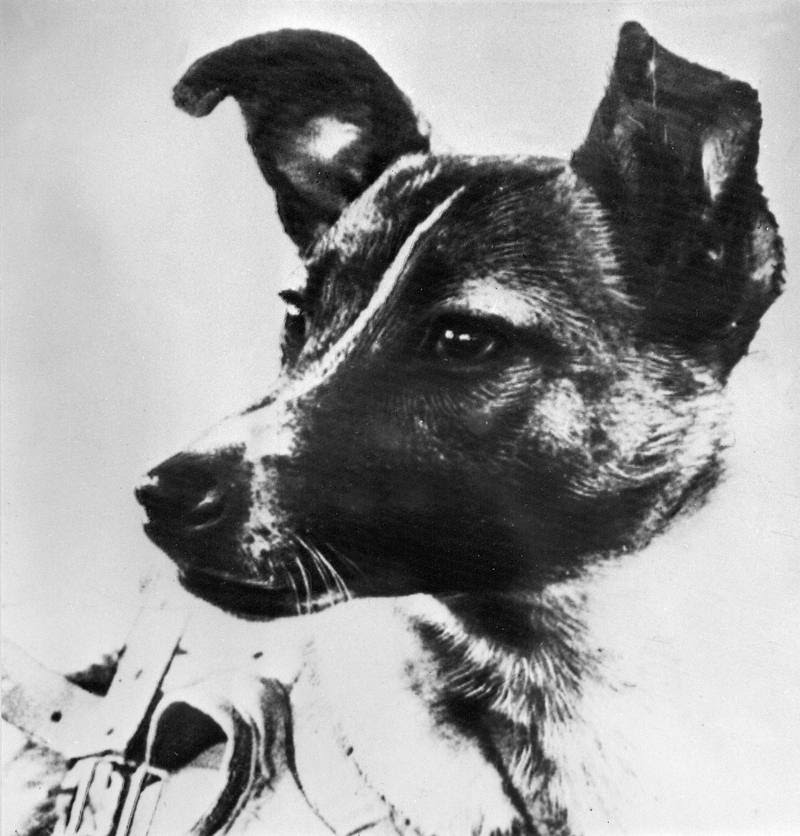 Laika, en una fotografía de 1957 publicada en el diario soviético 'Pravda'