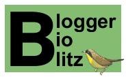 Blogger BioBlitz mini logo, words and yellow birdy