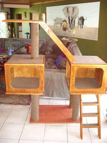 South African Cat House