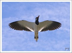 Spread the Wings and break the shackles