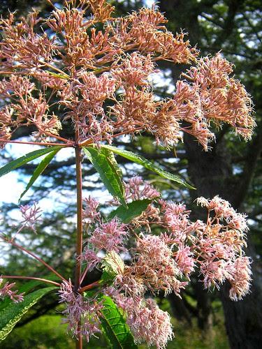 Willow Wood Arboretum! 9