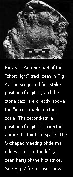 "Fig. 6 — Anterior part of the ""short right"" track seen in Fig. 4."