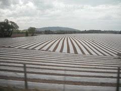 Plastic coated field