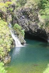 Rain Forest Pool