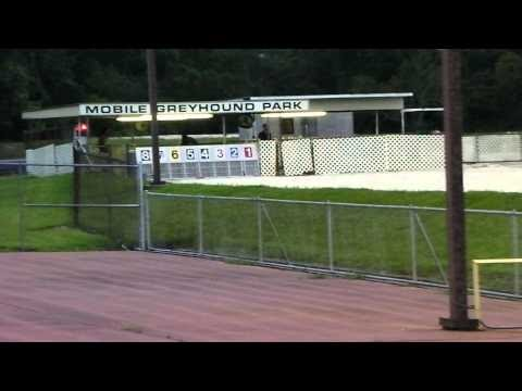 Palm Beach Greyhound Park Program