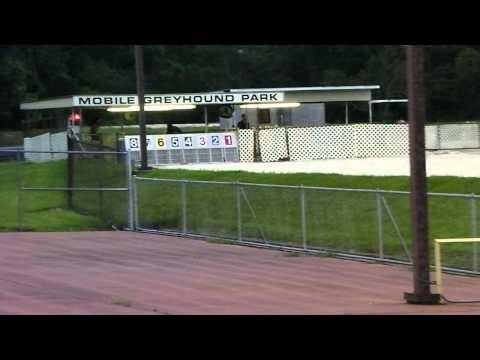 GreyhoundNews: Greyhound Racing Today - Wednesday April 19 ...
