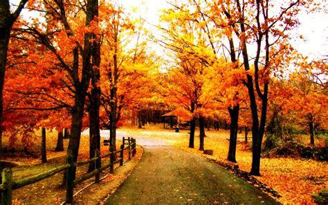 autumn inspiration sunhealers