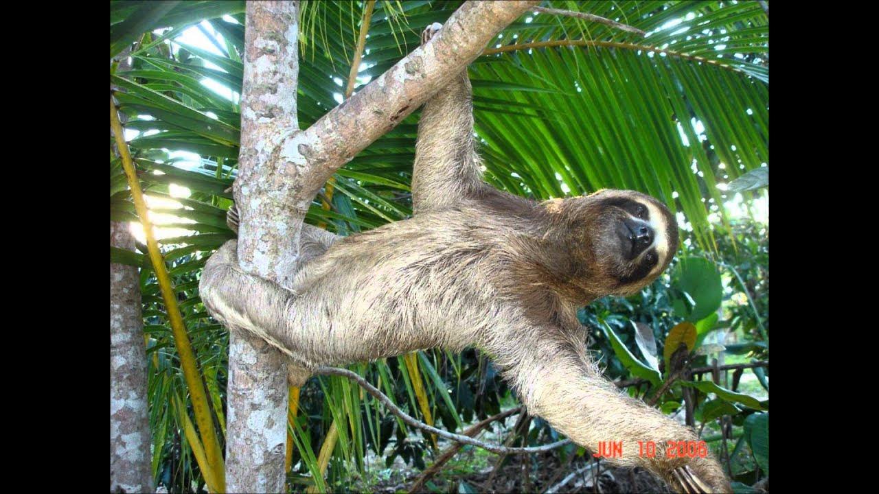 Happy sloths - YouTube