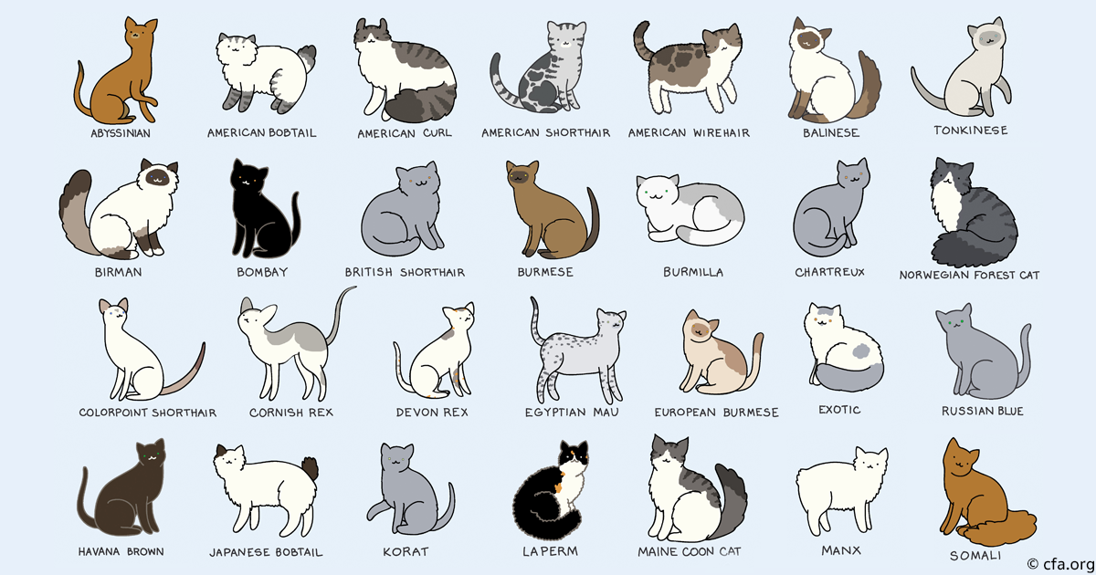 Image result for cat breeds