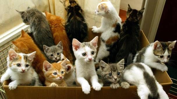 Hình ảnh Dân mạng lan truyền ảnh mèo hài hước khi Bỉ tiến hành vây bắt số 1