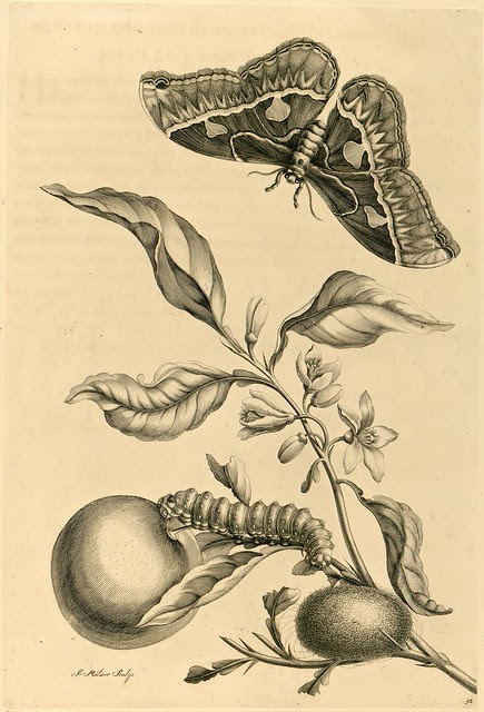 18th century book engraving of insects